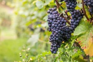wine-980218_1920