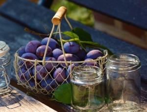 plums-1649305_1920